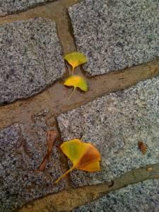 Von welchem Baum sind die Blätter? © D.S. Felix 2014